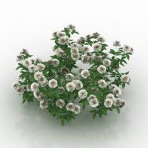 Flower rose white 3d model