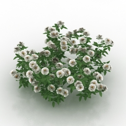 Flower rose white 3d model