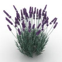Flowers 3d model free