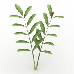 Plant Alpinia 3d model