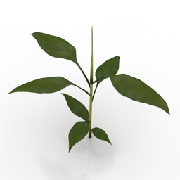 Plant Banana 3d model