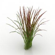 Plant Imperata 3d model