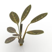 Plant Prayer 3d model