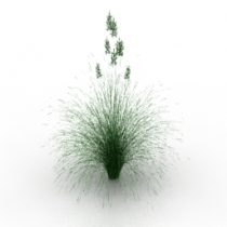 Plant lawn grass Idaho fescue 3d model