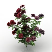 Rose bush 3d model free