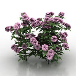 Roses bush 3d model download