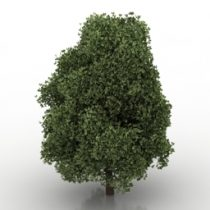 Tree 3d model download