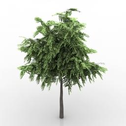 Tree Acacia 3d model