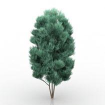 Tree Chamaecyparis 3d model