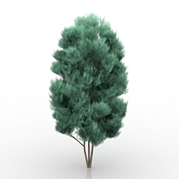 Tree Chamaecyparis 3d model