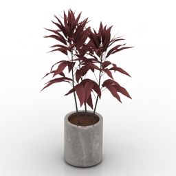Plant Cordyline Fruticosa 3d model