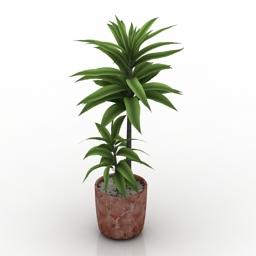 Plant palm 3d model