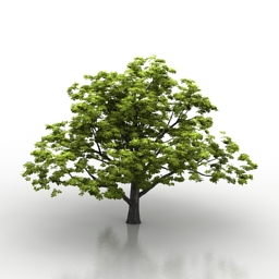 Tree Aesculus Grand 3d model