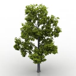 Tree oak 3d model