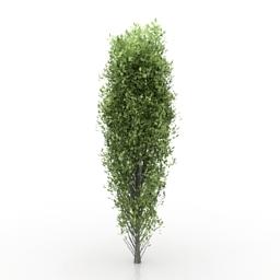 Tree poplar 3d model