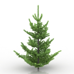Tree Abies Pardei 3d model