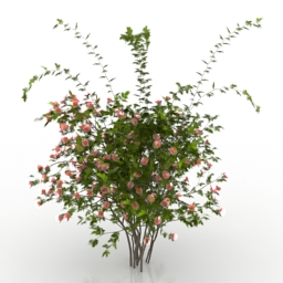 Bush Rosa Sanina Wild rose 3d model