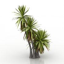 Palm Yucca aloifolia 3d model