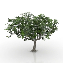 Tree Ficus Carica 3d model