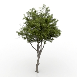 Tree 3d model download