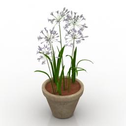 Flower Agapanthus 3d model