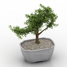 Plant decor tree 3d model