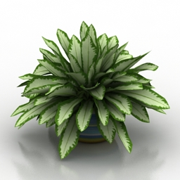 Plant house vase 3d model