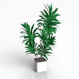 House Plant Palm 3d model