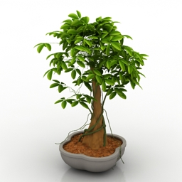 Plant house bonsai