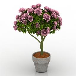 Plant house flowers 3d model