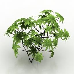 Plant Hojas G 3d model