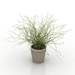 Plant house 3d model